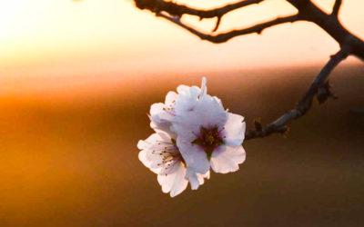 Day 37 Blossom